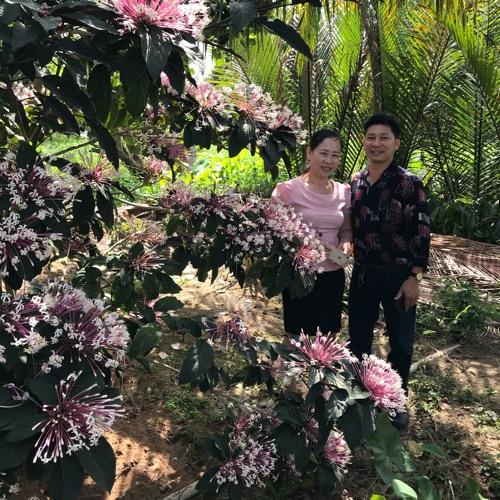 Thanh Kiều Profile Picture